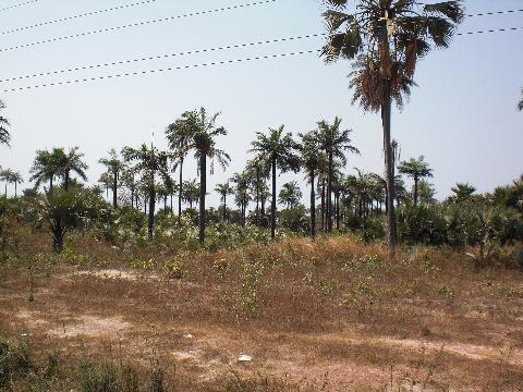 nigeria-land-1
